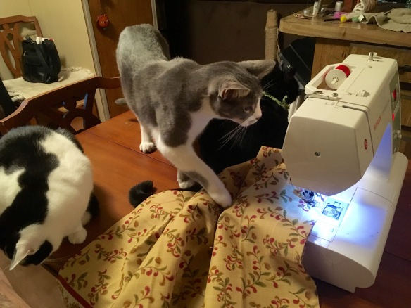 cats sewing.jpg