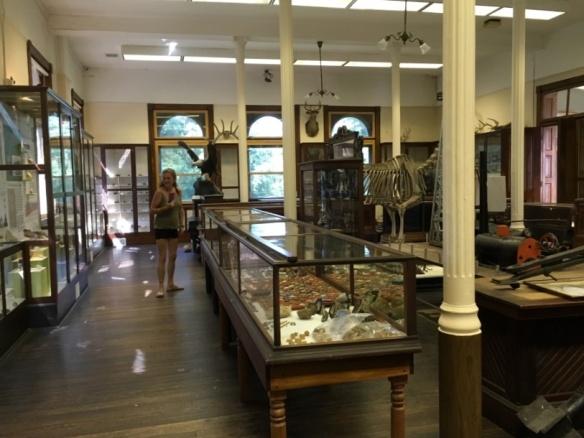 Natural History room.jpg